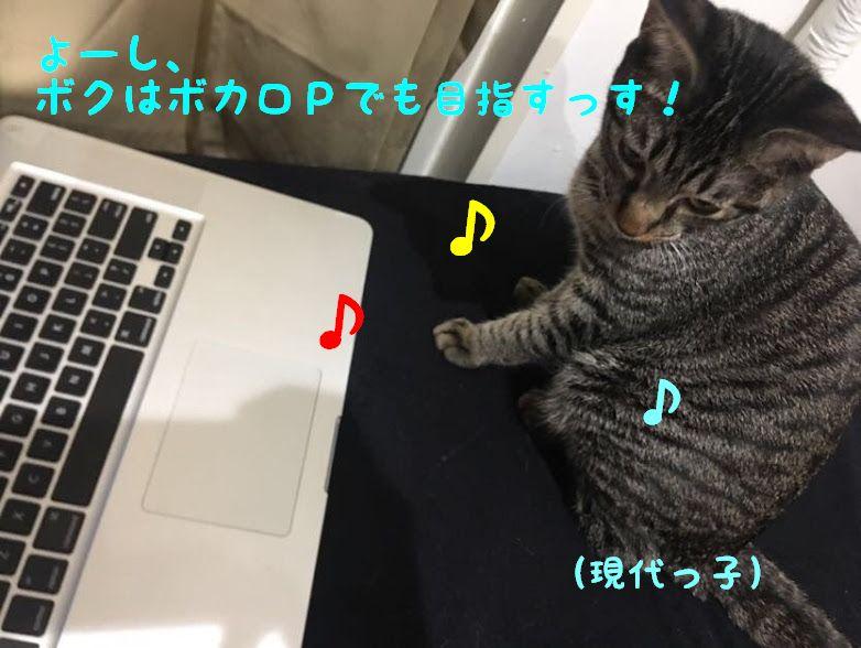 背中を押したらニャーと鳴く猫型楽器!とモフモフの猫電子楽器とは