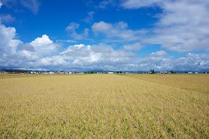 北竜町・豊穣の秋 2014