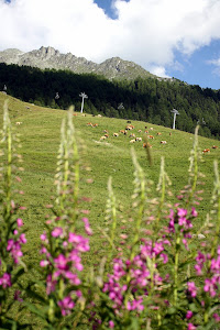 Hills and Flowers in Nendaz