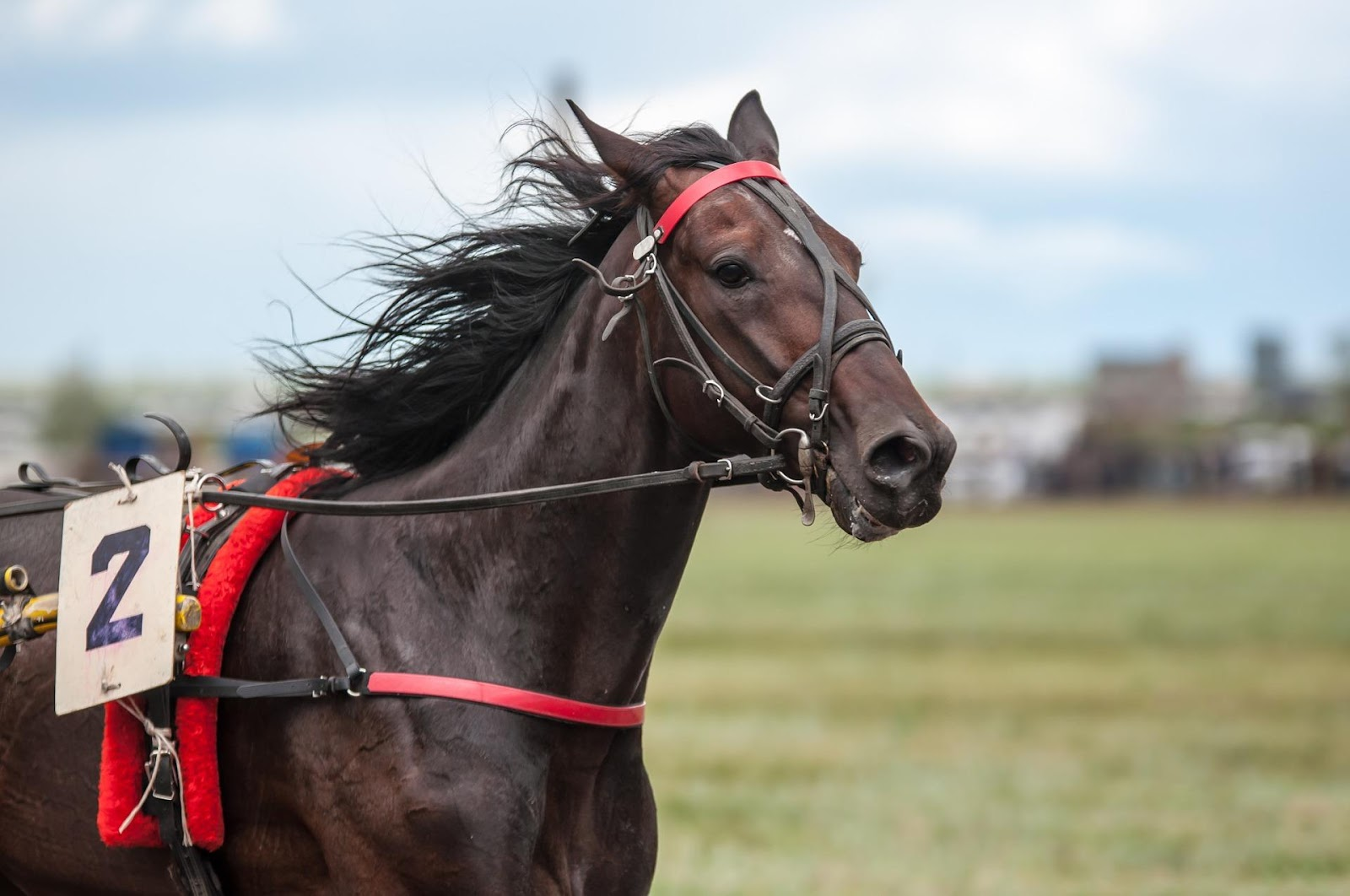 picture of harness racehorse,