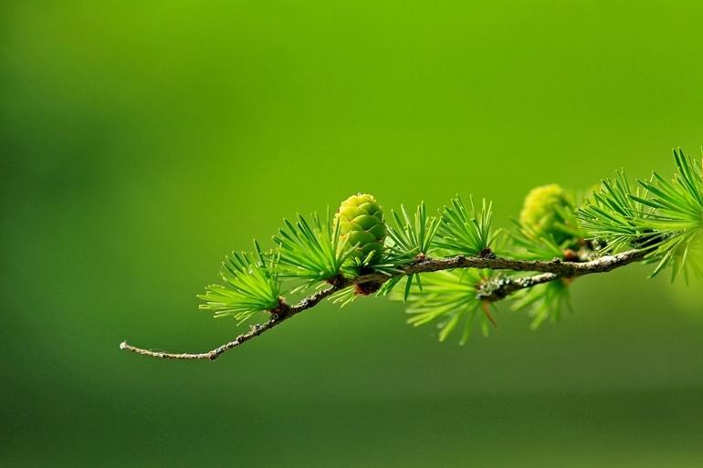 Folhas verdes em um galho