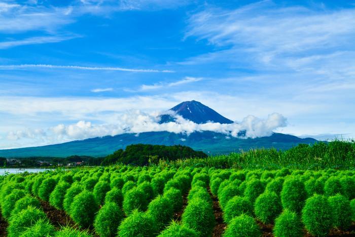 日本一の富士山絶景ポイント846399