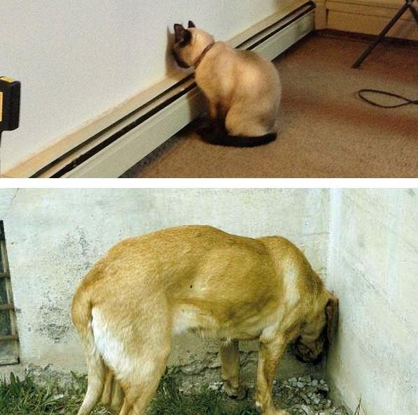dog pressing head against wall