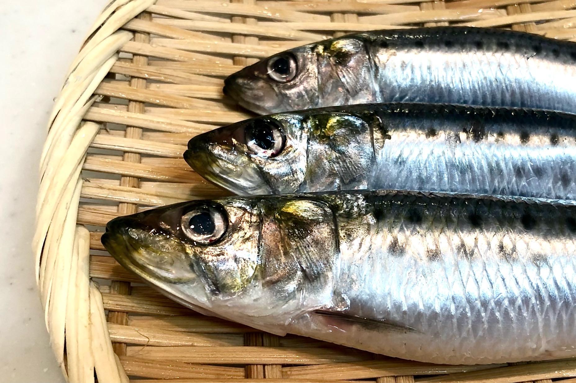 魚粉にはどんな栄養がある?