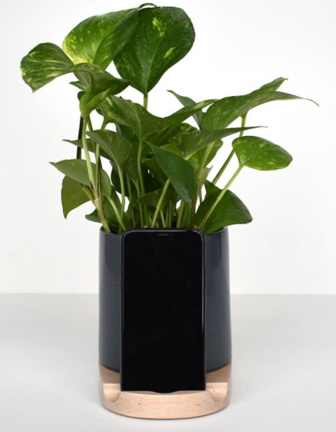 Ivy plant in plant holder phone charger gift idea on grey home office desk surface
