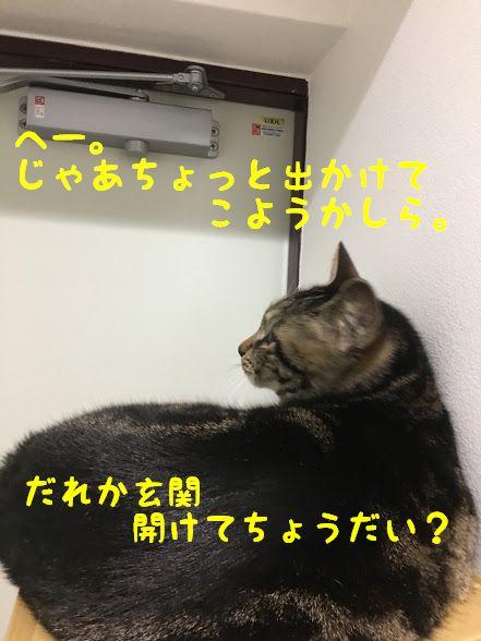 ピーナッツの幻の猫、ファーロン!スヌーピーに登場する幻の猫とは