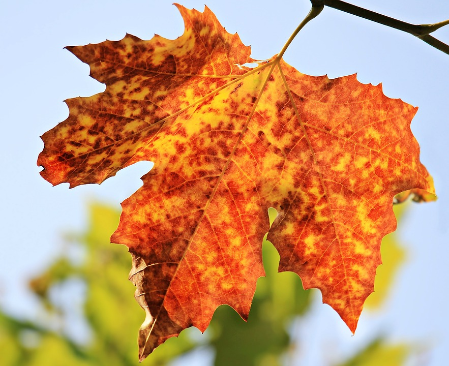 Free photo: Autumn, Autumn Leaf, Leaves - Free Image on Pixabay ...