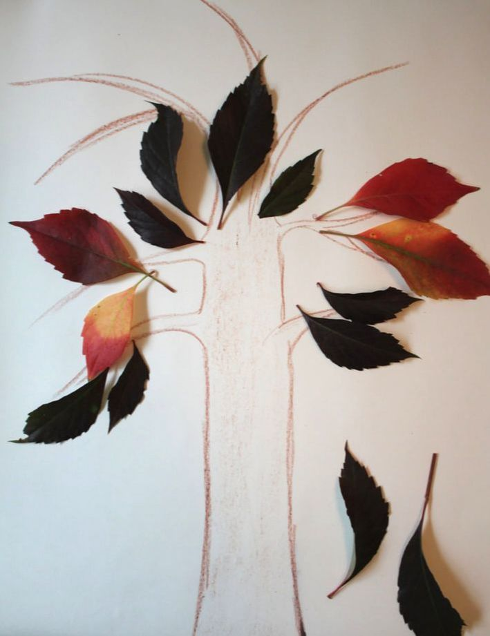 Leafs used as manipulatives for math