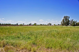 Irrigated back acre for 2 acre horse property in San Tan Valley