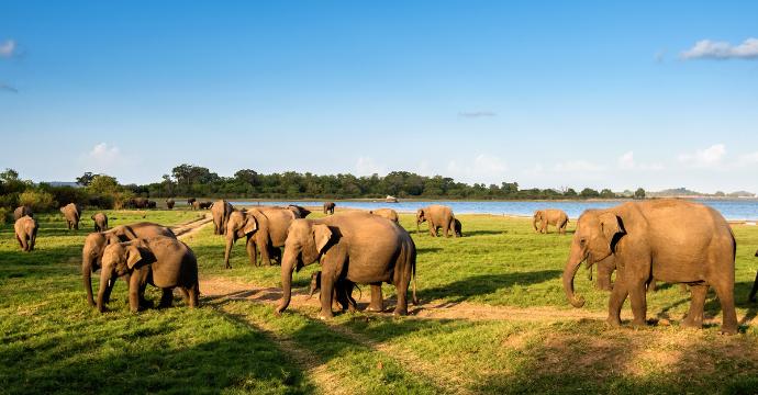 Parque Nacional Minneriya: Animales en Sri Lanka