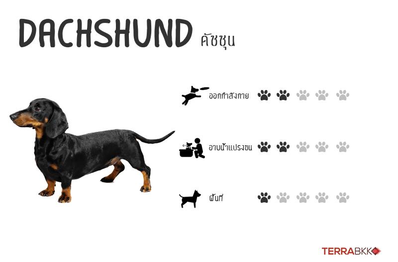 10. ดัชชุน (Dachshund)