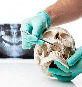 çene kemiği iskeleti tutan doktor