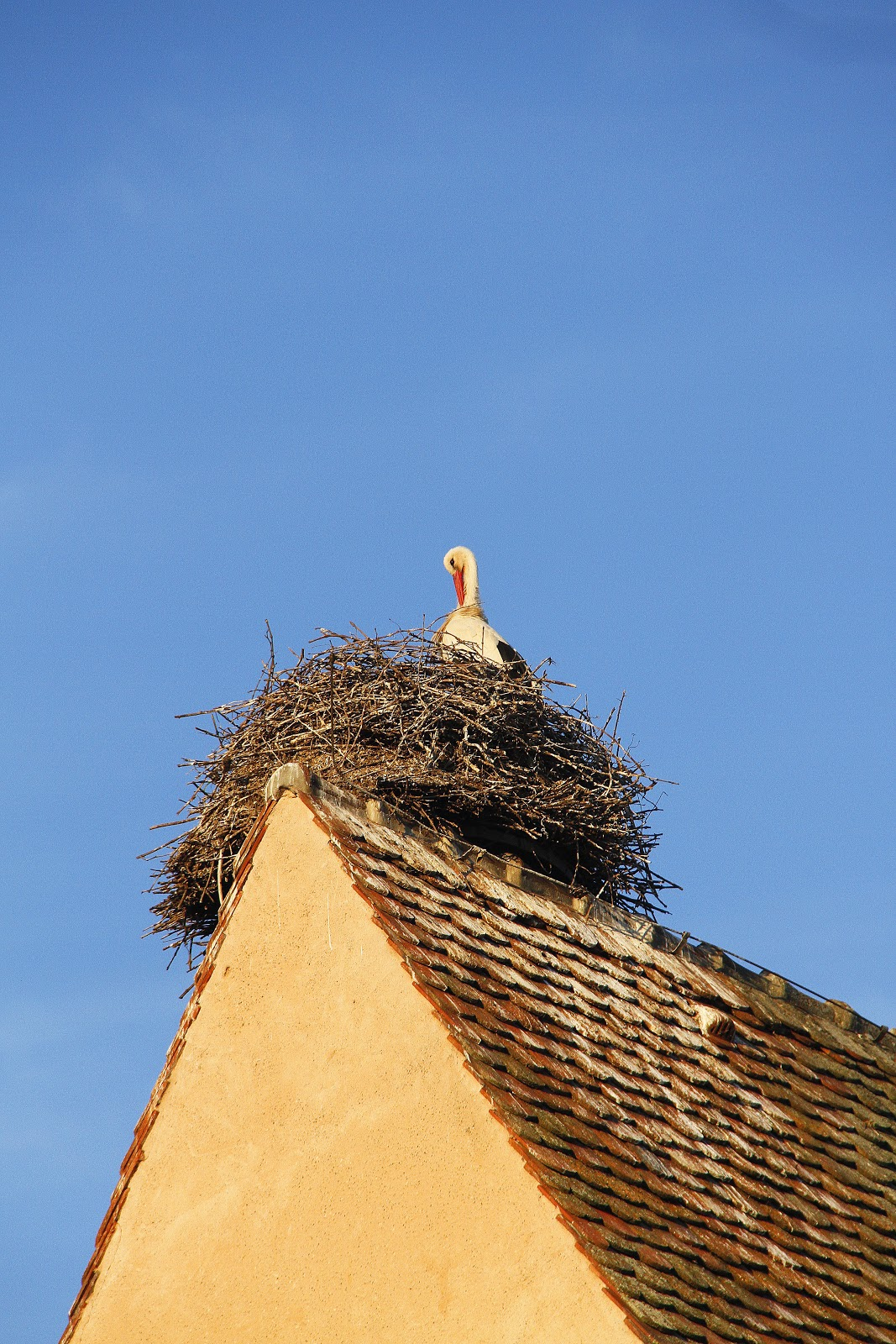 29_Alsace13.jpg