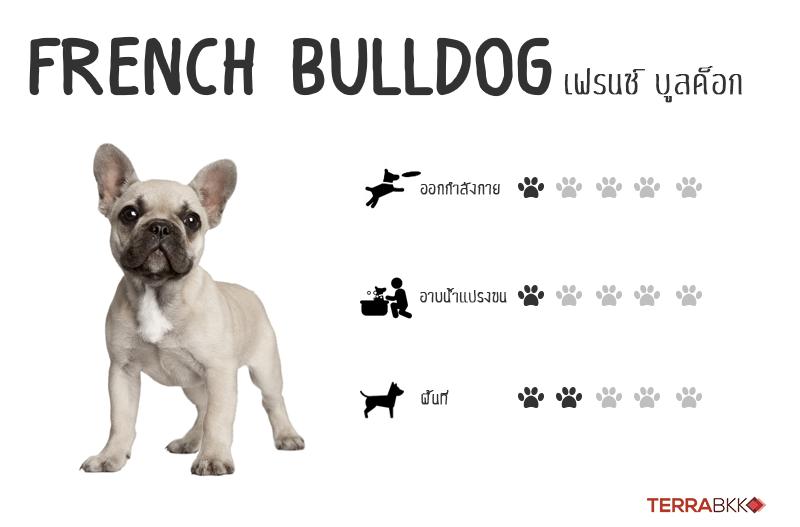 3. เฟรนช์บลูด็อก (French Bulldog)
