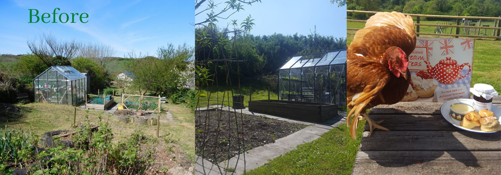 At Lower Campscott Farm Self Catering cottages they have been busy working on their vegetable gardens.