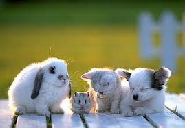 Puppy, rabbit, kitten, and hamsters.