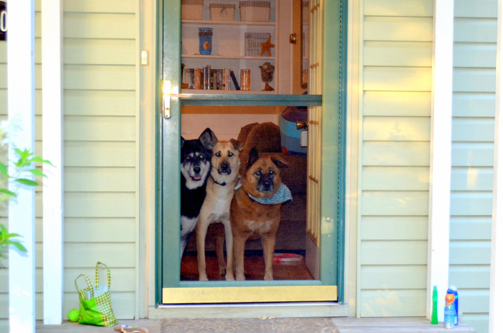 Susie's Reviews and Giveaways: Full (Dog) House: Introducing