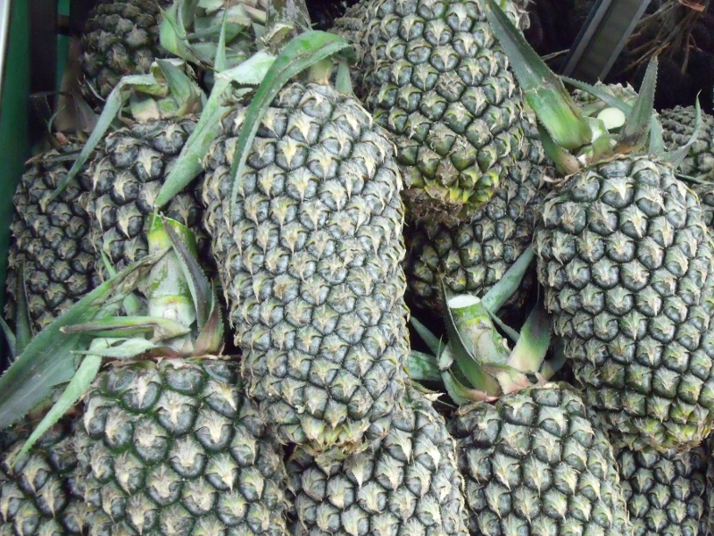 types of pineapple
