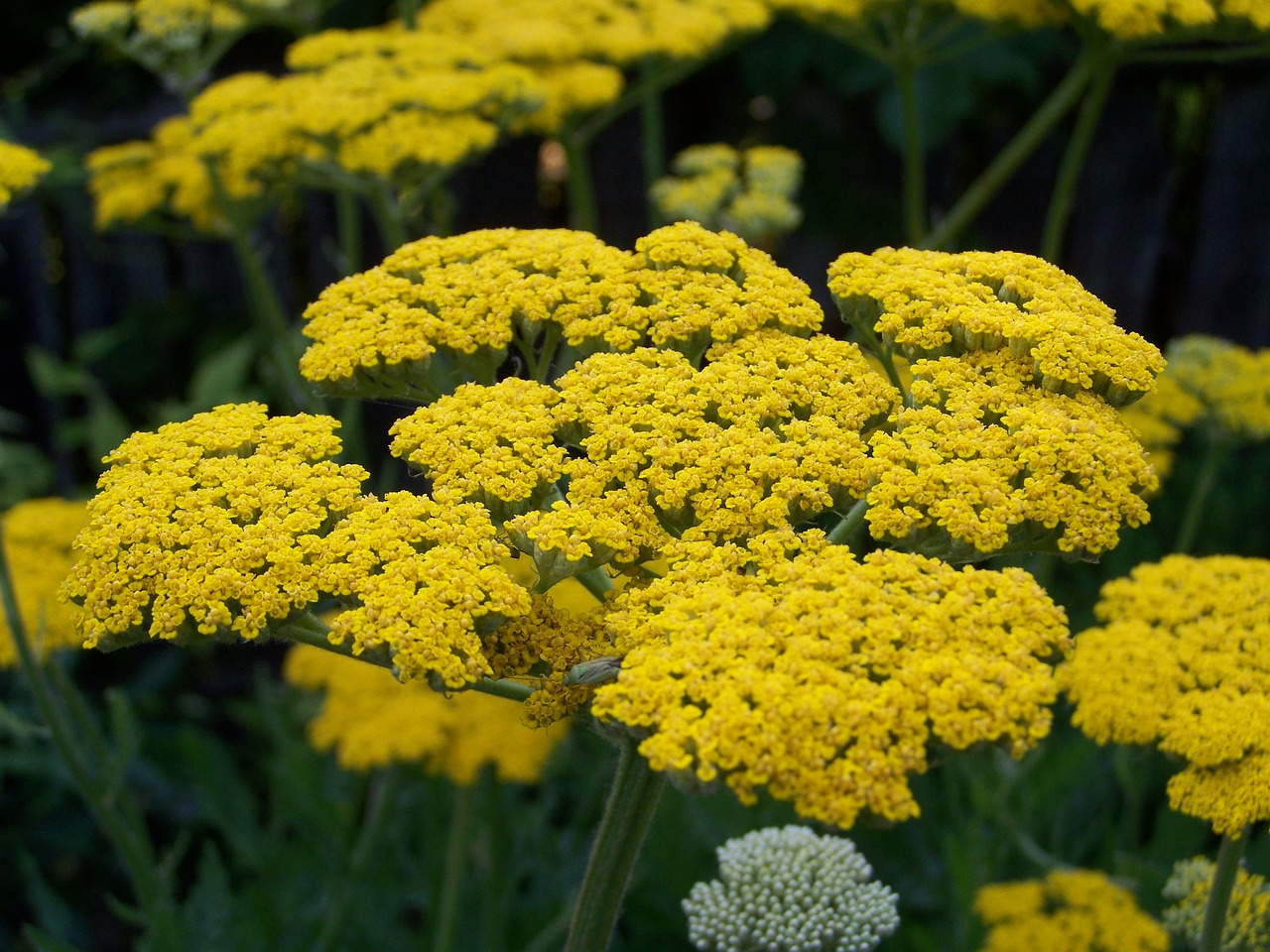 These Flowers Will Do Best In Your Garden In The Great State Of Ohio