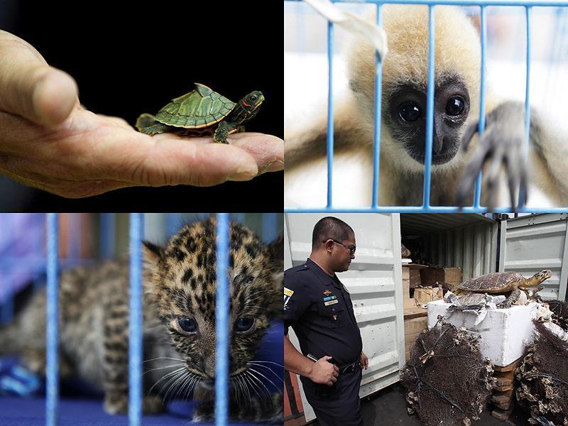 000017 Экзотические животные, изъятые при попытке контрабанды