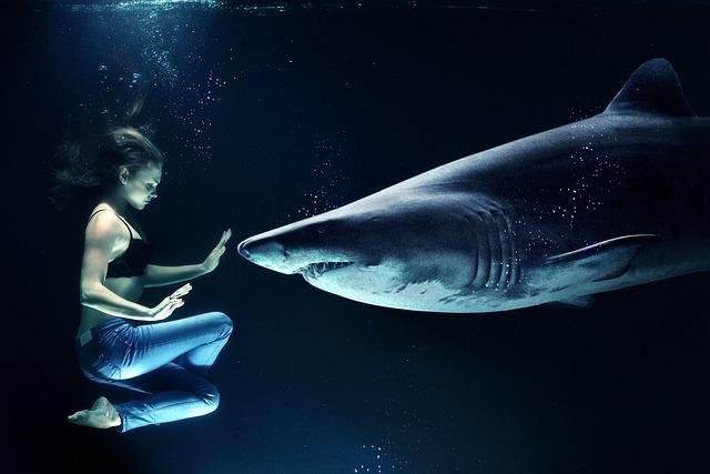 big shark niche