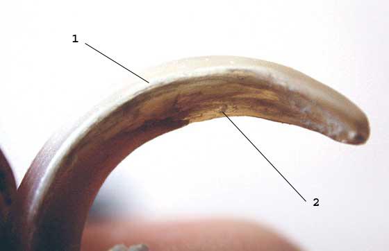 Close-up view of a nail