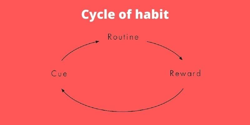 cycle of habbit