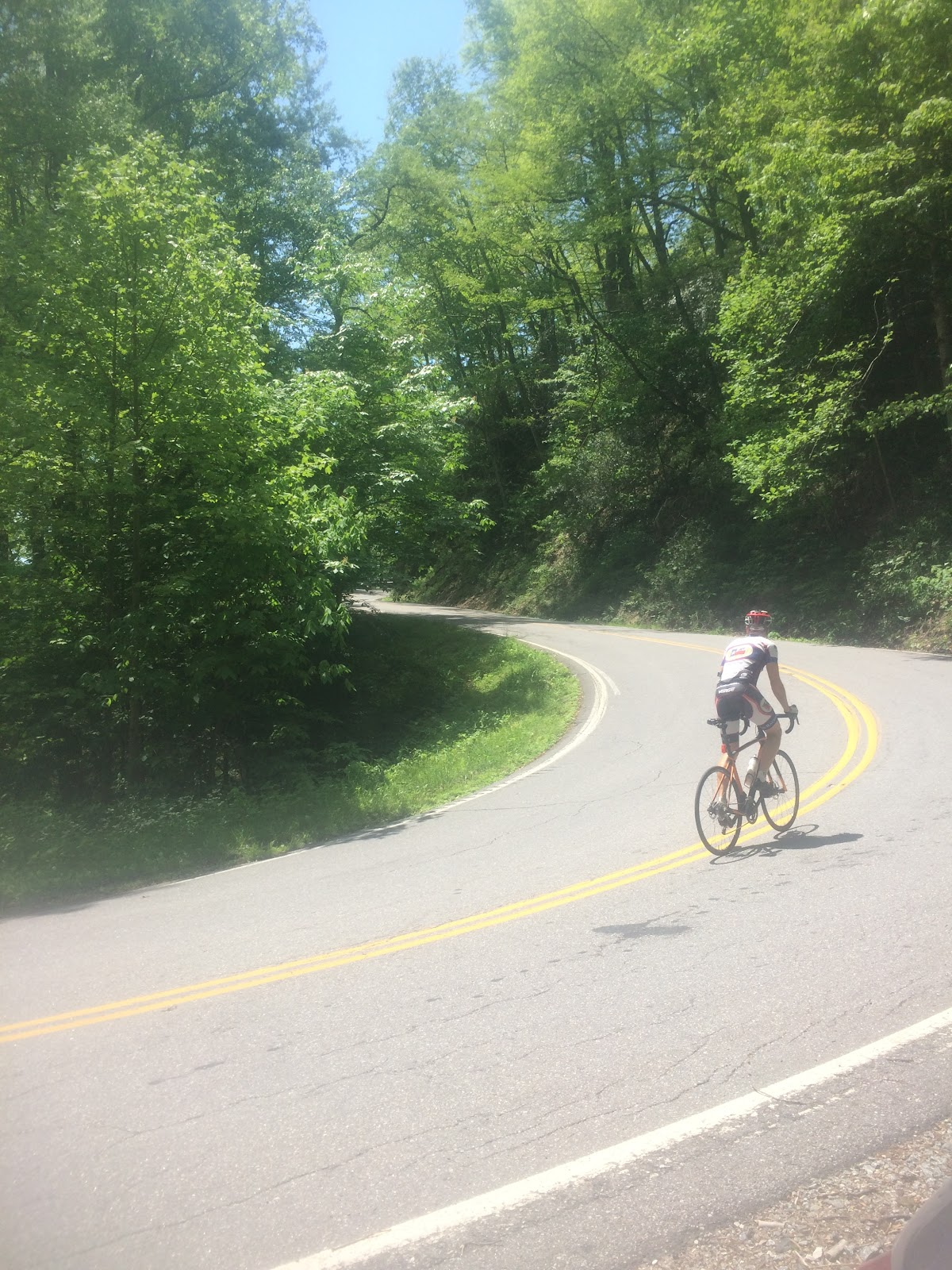 Climbing Mt. Mitchell by bike - cyclist on road surrounded by trees