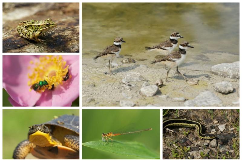 Species in their habitat at Rouge Park in Toronto