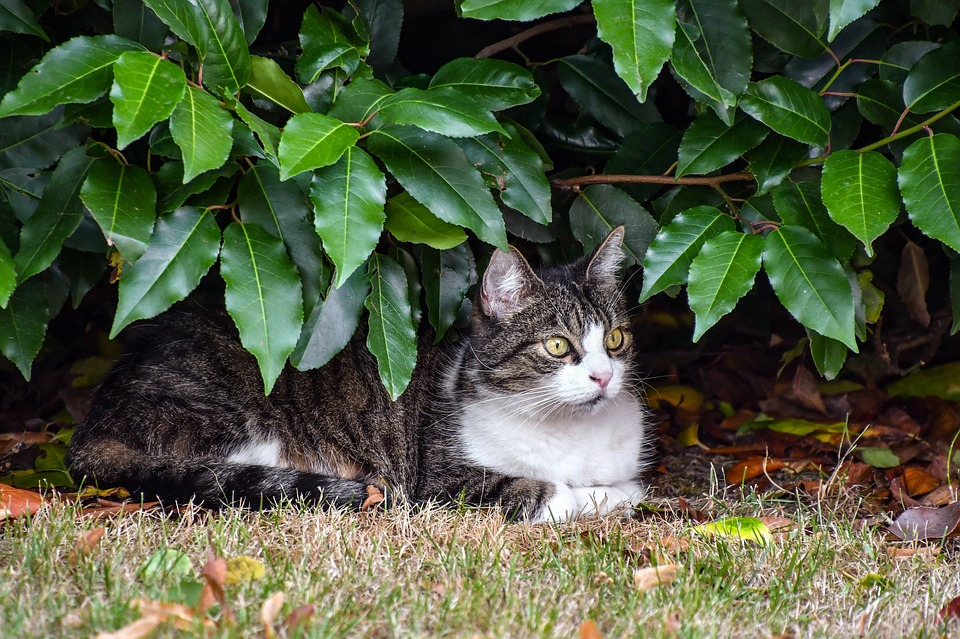 a cat keeping cool in the shade of a bush