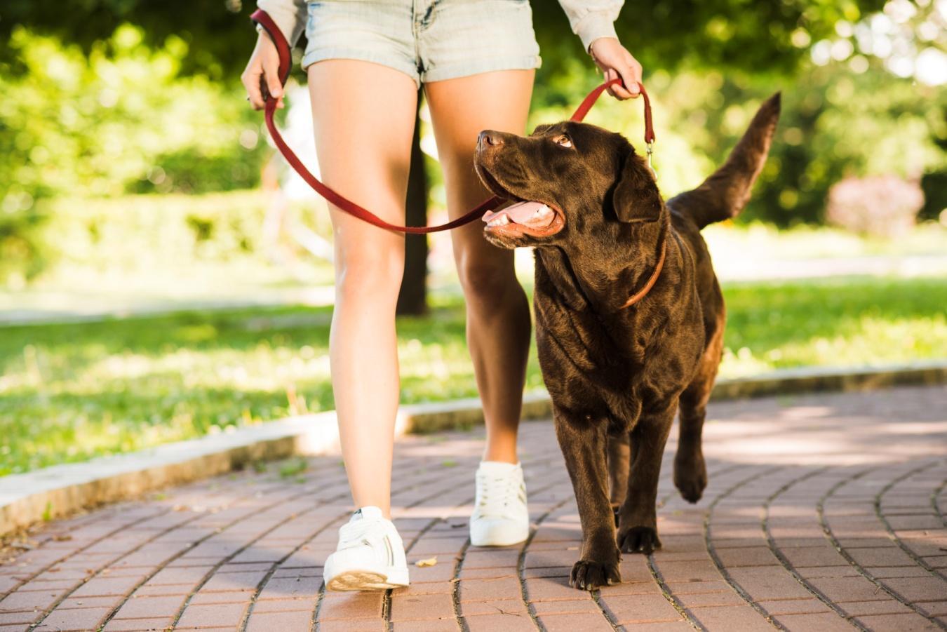 La correa de tu mascota debe ser larga y resistente