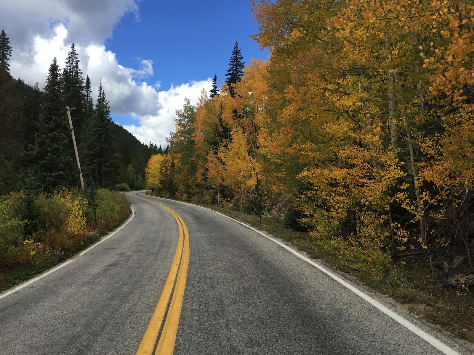 Cycling Independence Pass - trees and road during fall