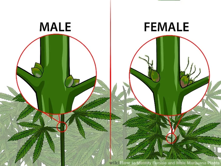 how to tell the difference between males and females