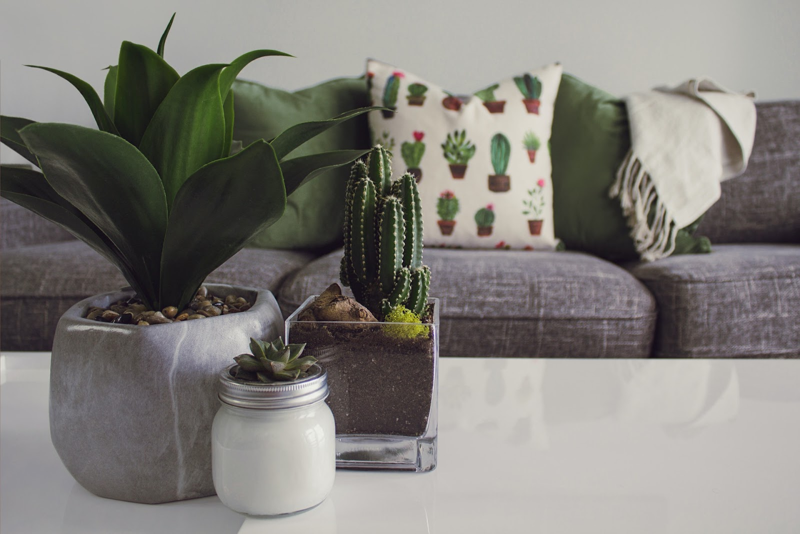 Three plants in pots on a coffee table in front of a sofa.