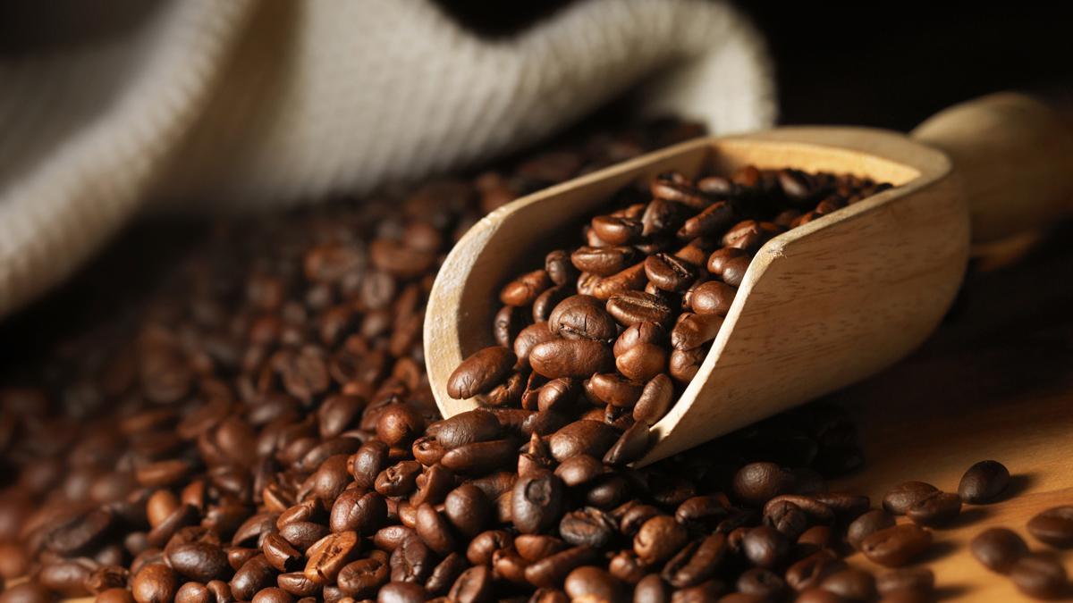 Cà phê arabica Lâm Đồng mang đến cho bạn những điều bất ngờ