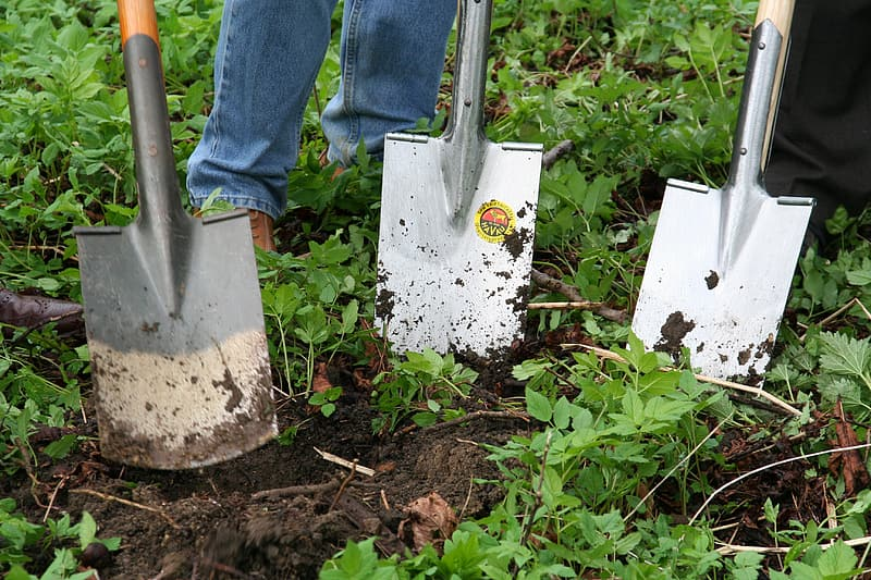 People with spades digging weeds out of uneven garden