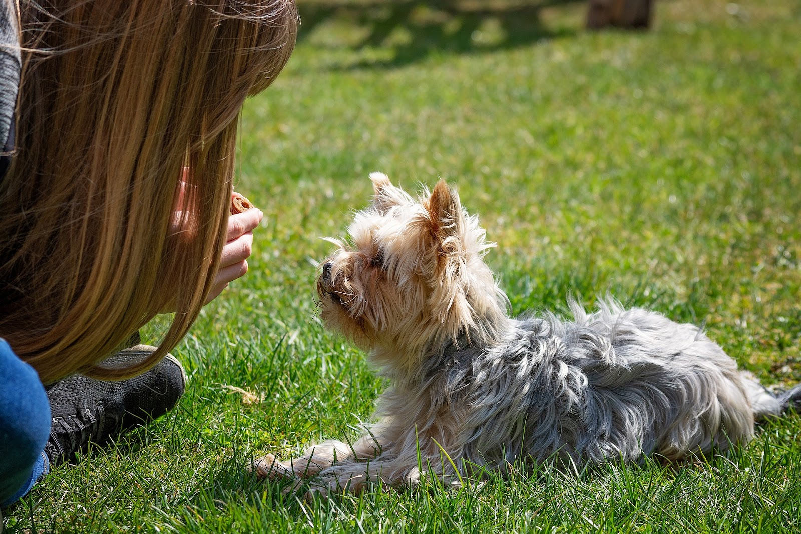 blonde girl training small dog patiently with small treats in grass
