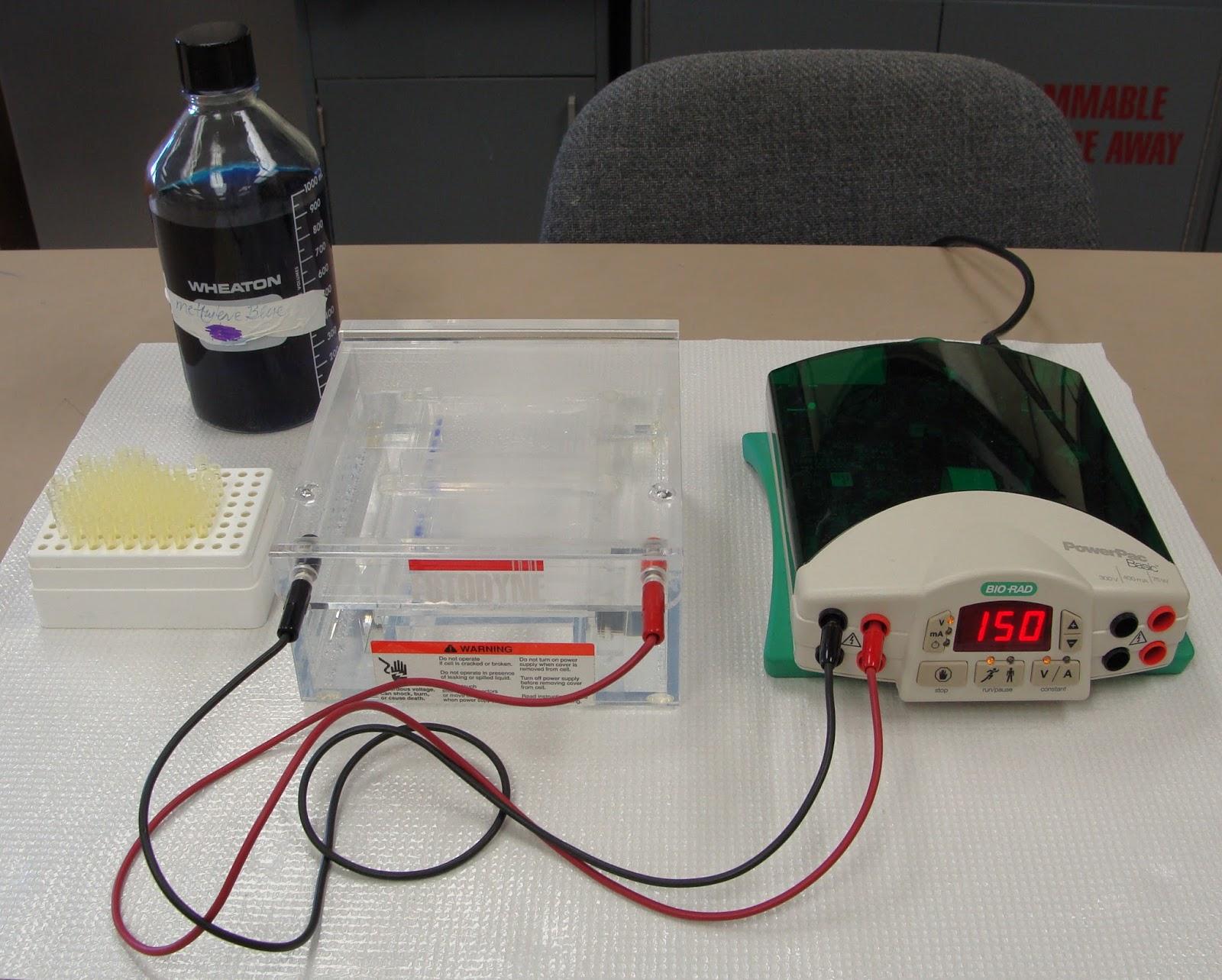 electrophoresis set