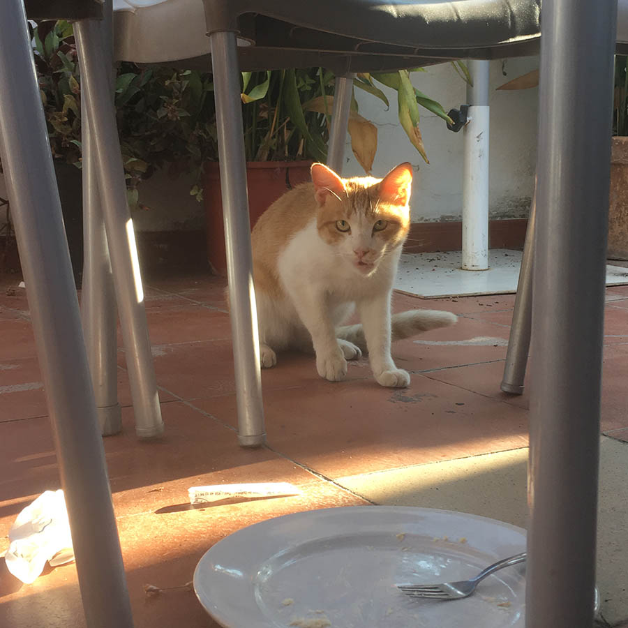 A hungry cat in Quentar, Spain