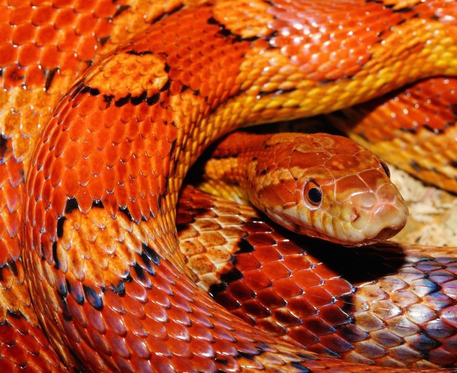Image result for snake pet