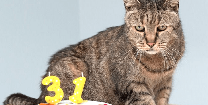 How Long Do Cats Live Cat Life Span Cat Evolution