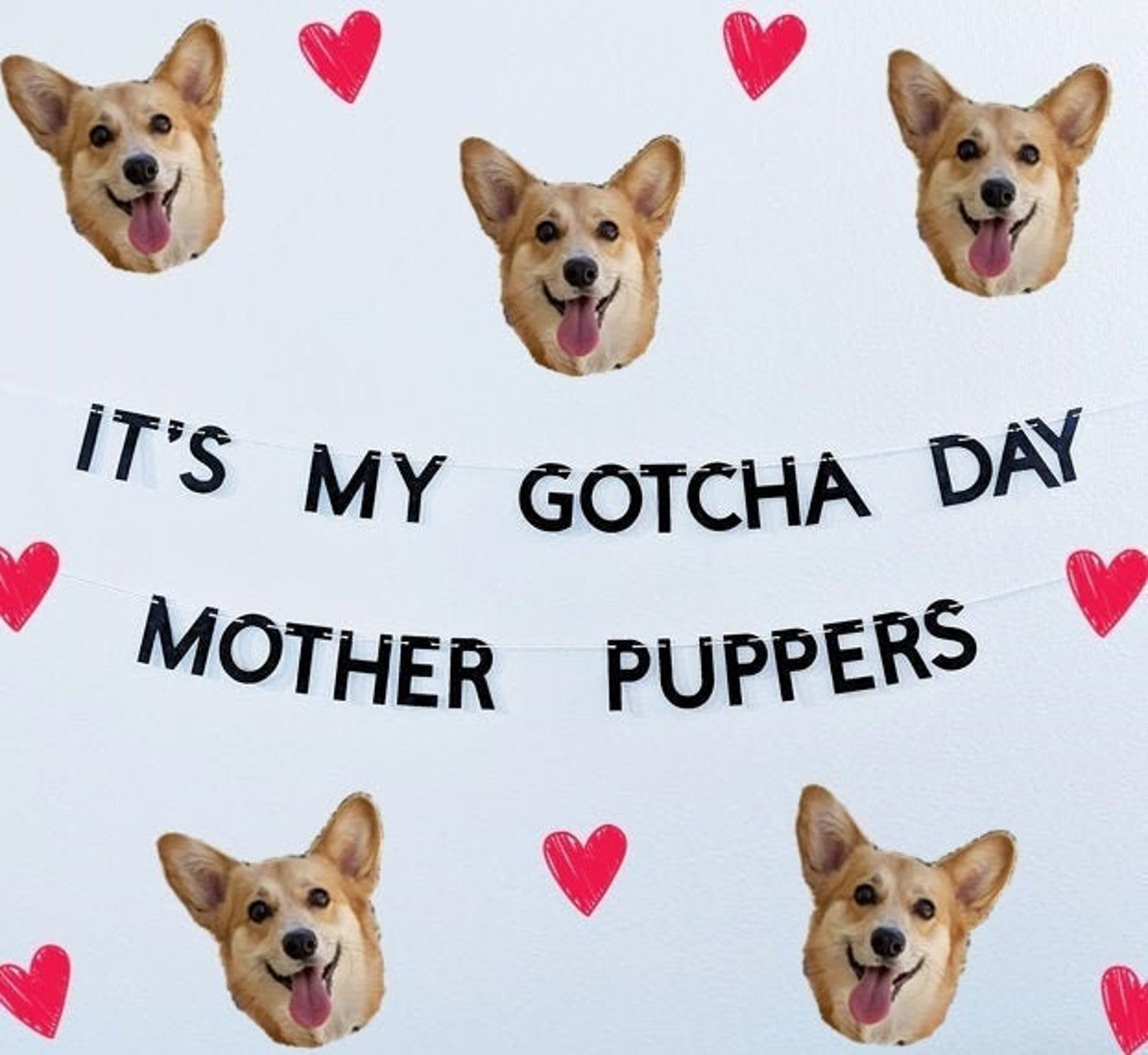 """A wall banner that says """"It's my Gotcha Day mother puppers"""" on a white wall with Corgi heads and hearts all around."""