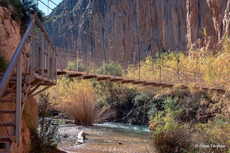 La imagen puede contener: puente, planta, árbol, exterior, naturaleza y agua