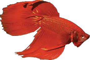 File:Beta Fish Icon.png
