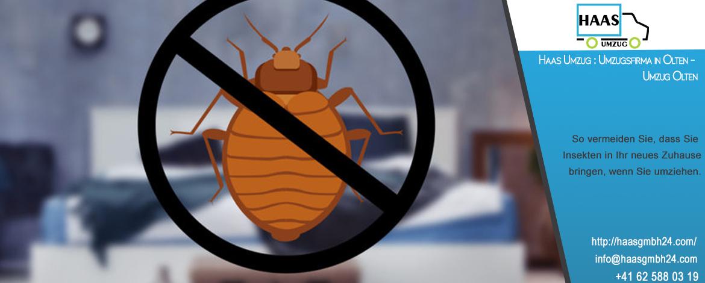 So vermeiden Sie, dass Sie Insekten in Ihr neues Zuhause bringen, wenn Sie umziehen. Haas Umzug : Umzugsfirma in Olten