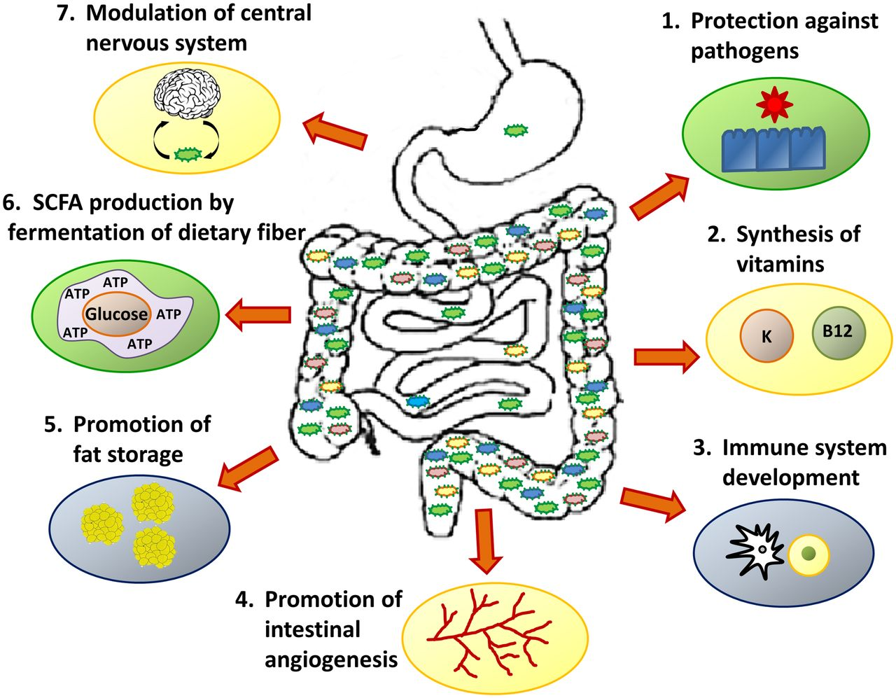 Image result for microbiome function