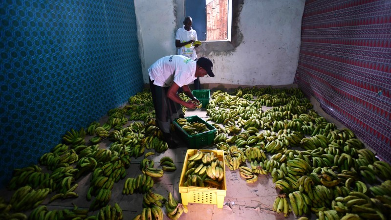 Opinion: Global food systems can only be truly transformed with a people's summit