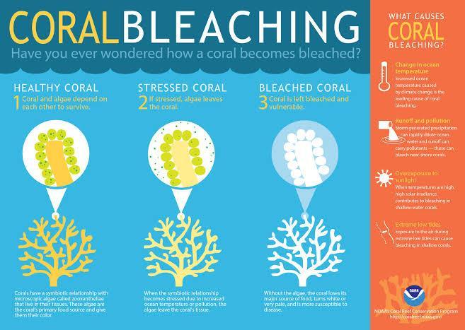 https://i0.wp.com/www.insightsonindia.com/wp-content/uploads/2019/05/Coral-bleaching.jpg?ssl=1