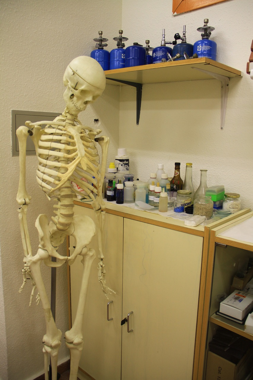 Anatomy & Physiology in 5 weeks | Her Campus