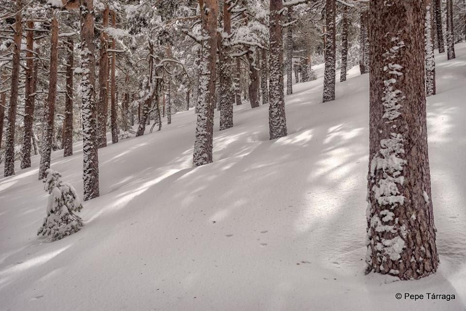 La imagen puede contener: nieve, árbol, cielo, exterior y naturaleza